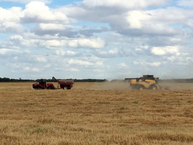 Hamblin Harvest on Snarr land
